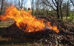 Почему не нужно сжигать мусор