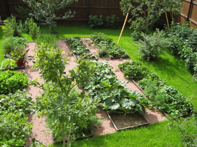 Чем удобрять огород