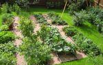 Натуральные удобрения — чем удобрять свой огород?