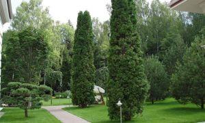 Какие деревья посадить на участке