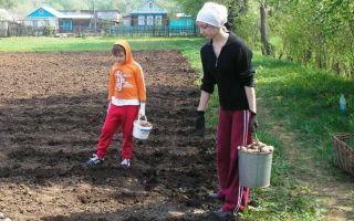 Созидательный общий труд на благо семьи